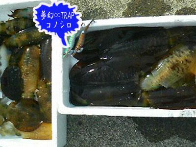 画像2: (3.5号 rattle ♪)   コノシロ