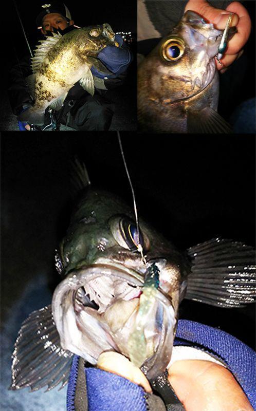 画像1: 漁港ワームツートン (S14/SEXYグリーン/ケイムラ)